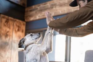 Gravity Haus Breckenridge - Pet Friendly Lodging